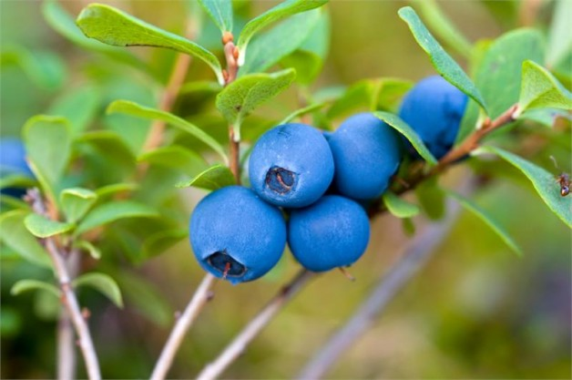 blueberry-juice-health-benefits