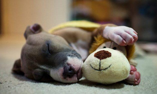 cachorro-dormindo-2-e1490408755270-766x459